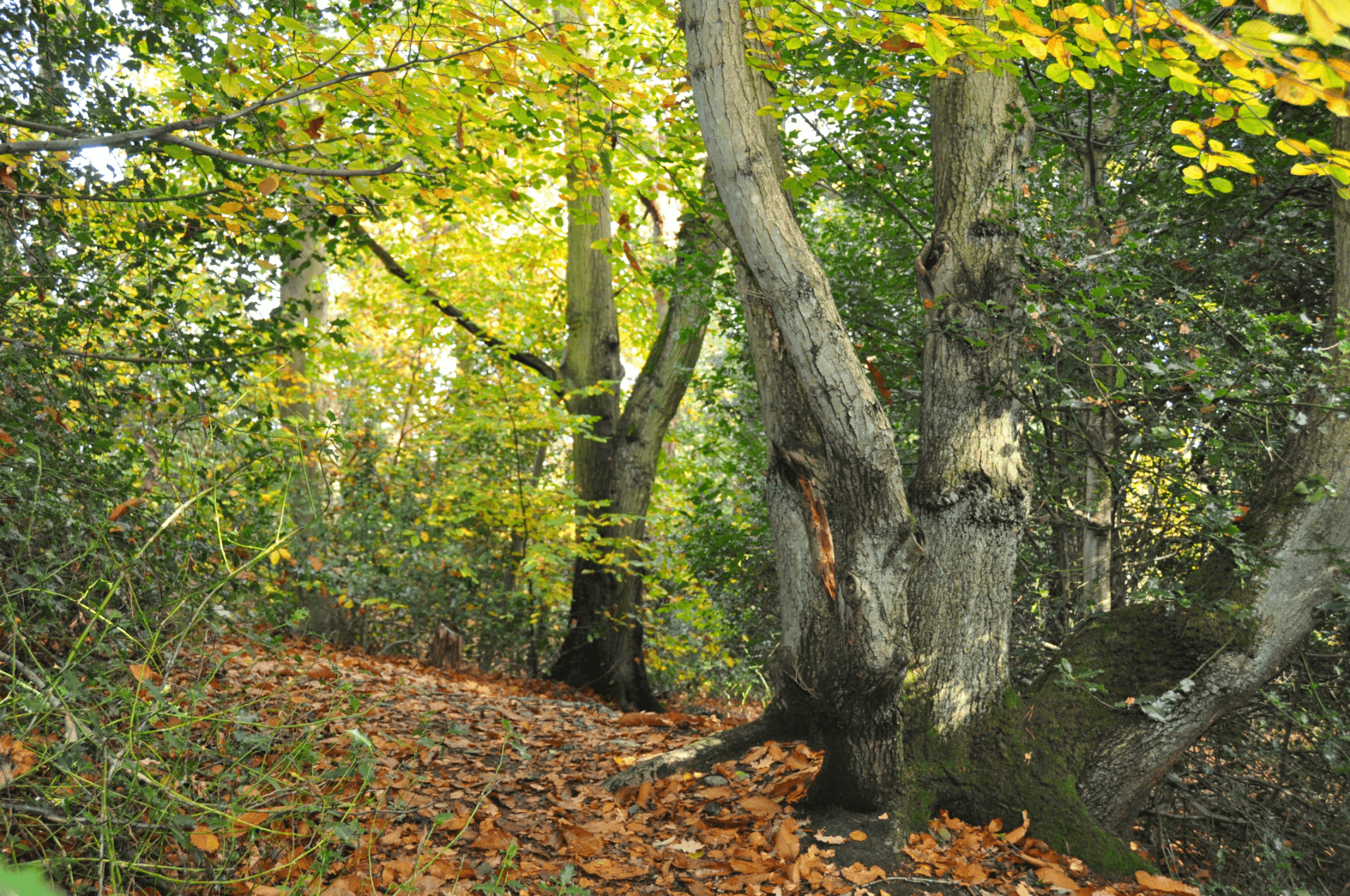 Rowhill Nature Reserve